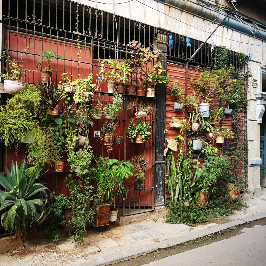 A garden old Havana Style - 4 Days In Havana Vieja