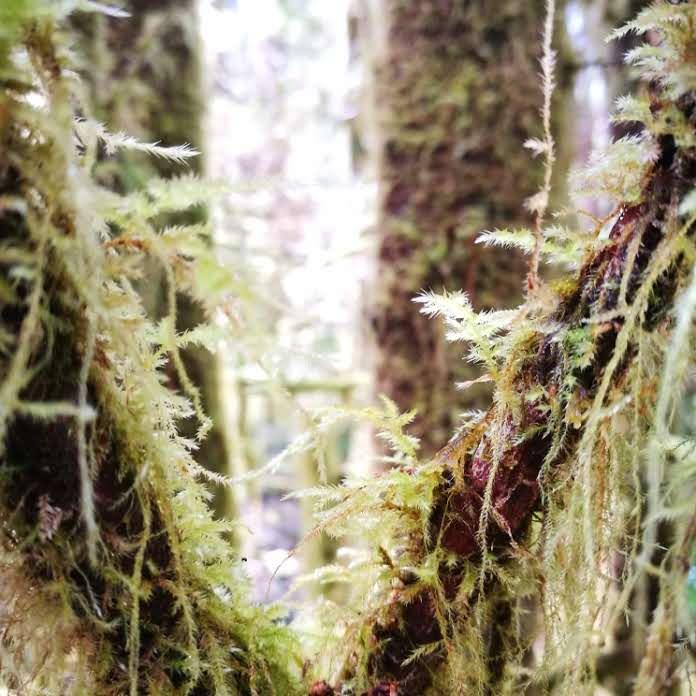 Destination Addict - Taking a walk through the rain forest, near Tofino, British Columbia, Canada