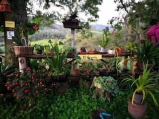 Such pretty gardens at El Ocaso - Salento Coffee tour