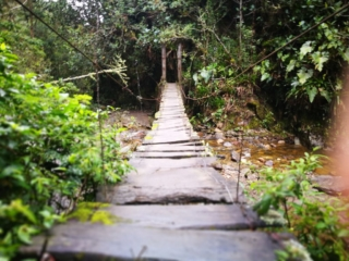 One of the many rickety bridges to cross on the Cocora Valley