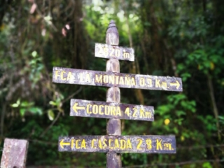 Finding our way through the Cocora Valley