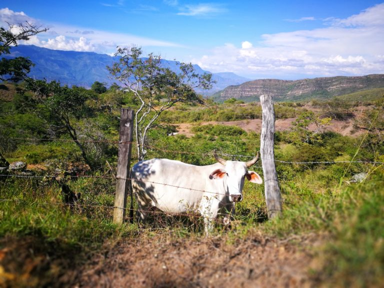 Making friends along the way, hiking in Santander Colombia