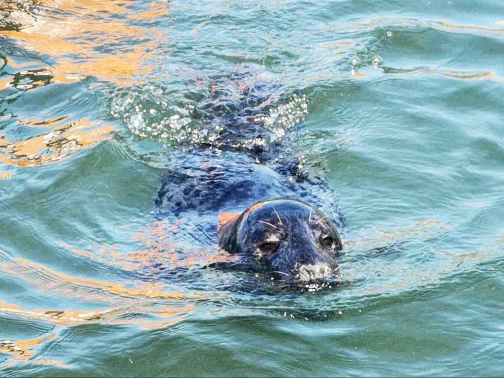 Getting up close & personal with this little fella - Rib Ride Anglesey - Skerries Tour, North Wales